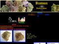 Brastones - collection minerals